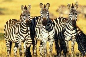 Tổng hợp từ vựng tiếng Anh chủ đề động vật hoang dã