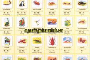 Học tiếng Trung thú vị qua chủ đề các con vật